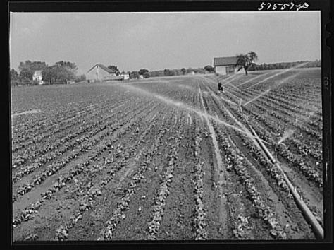 Starkey Bean Field 1941 LOC