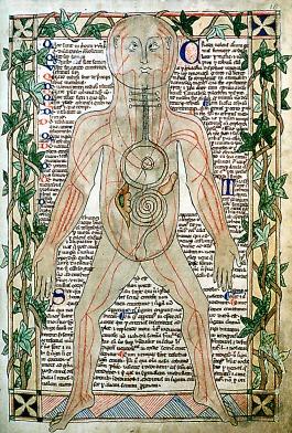 13th_century_anatomical_illustration_-_sharp